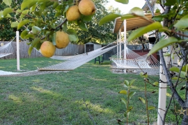 luxury-home-for-sale-round-rock-fruit-tree