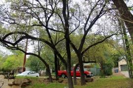 3100-s-5th-austin-tx-78704-live-oaks